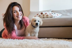 Pet Stain Removal and Pet Odor Removal